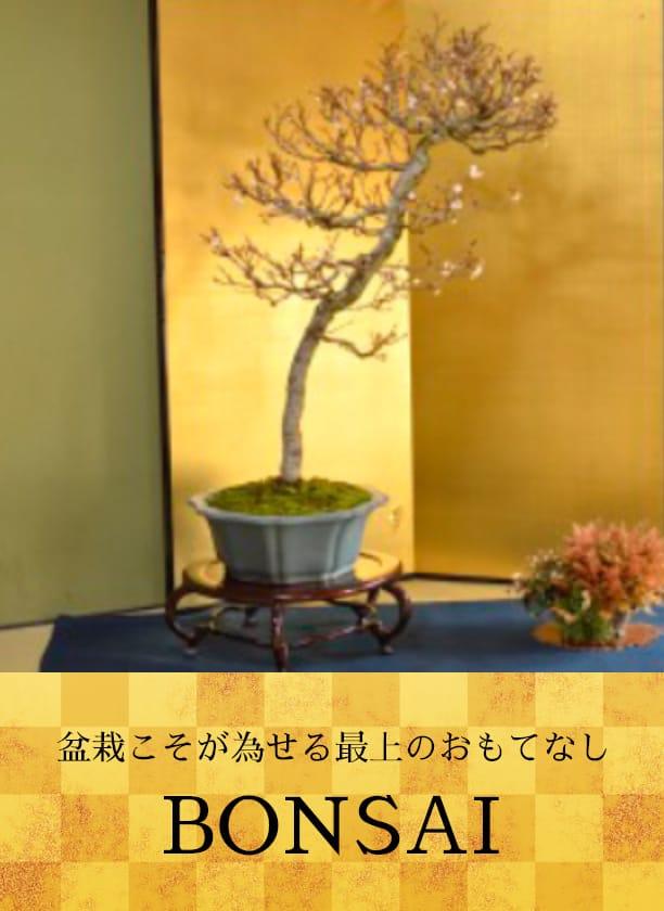 盆栽こそが為せる最上のおもてなし BONSAI
