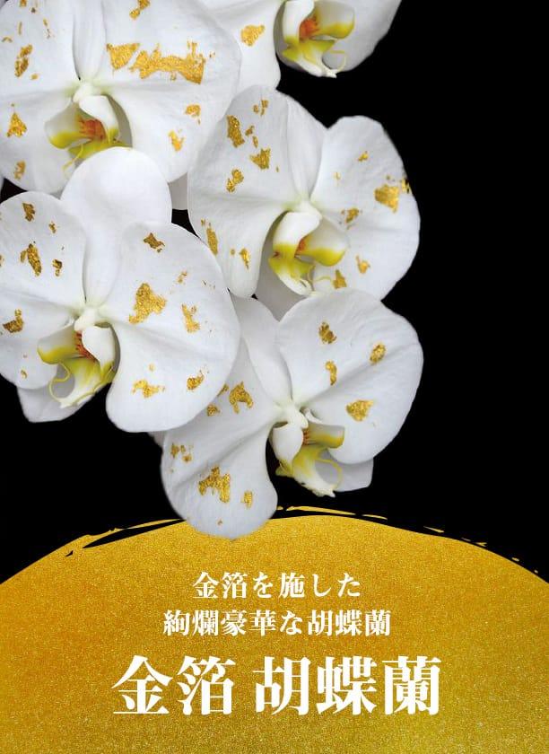 金箔を施した絢爛豪華な金箔胡蝶蘭