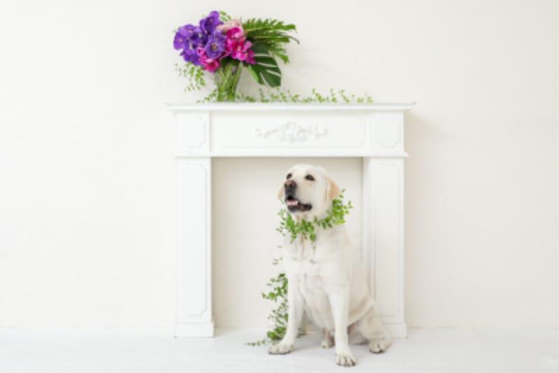 胡蝶蘭とシェーン(犬)