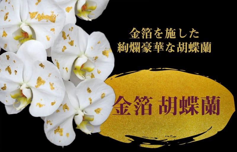 金箔を施した絢爛豪華な胡蝶蘭 「金箔 胡蝶蘭」