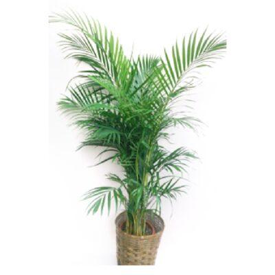foliageplant-003