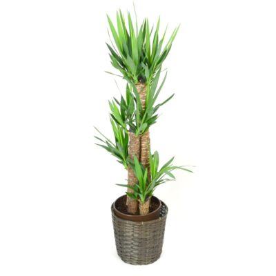 foliageplant-007